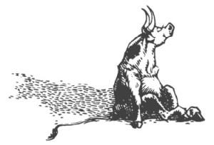 ferdinandbull